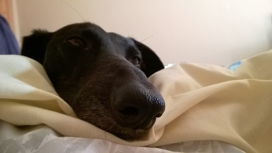 dog snuggle
